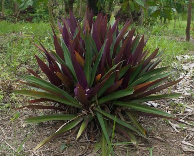 Usada como fuente medicinal en la alimentación humana o animal, la flora de la península de Yucatán pierde espacio ante el desinterés de las nuevas generaciones por preservar el conocimiento generado a partir de ella. (Notimex)