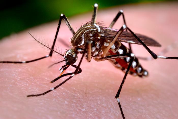 Los casos de dengue y chikungunya suman más de 25 mil hasta junio de 2015