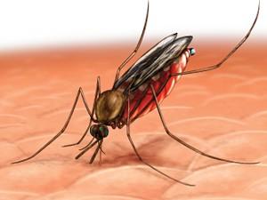 malaria-cura