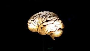 La pérdida de la memoria y capacidad de aprendizaje causada por el alzhéimer lleva a consecuencias trágicas. Científicos afirman haber hallado cómo bloquear el desarrollo de la enfermedad.
