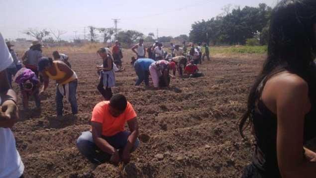 Crearán Plan de Agricultura Urbana con plantas medicinales (Créditos: @NicolasMaduro / Archivo)