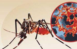 mosquito-Zika-27-01-16-copy