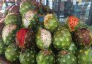 Científicos mexicanos analizan pulpa de pitaya