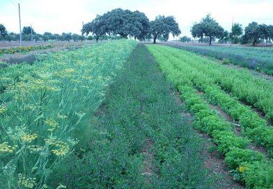 Promueven siembra de plantas medicinales en comunidades de Carabobo y Zulia
