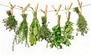 plantas-medicinales-600x360