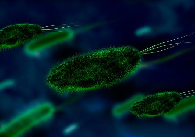E coli en el cerebro de personas con alzhéimer
