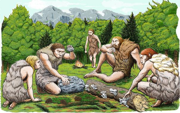 <p>Cinco neandertales de El Sidrón degustan setas, piñones y musgo. / Abel Grau (CSIC)</p>