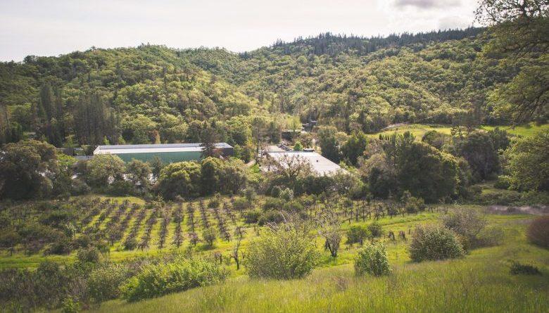 Bodega famosa de California se está convirtiendo en complejo de cultivo de cannabis