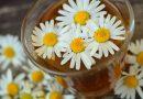 España: Los farmaceúticos avalan la eficacia de las plantas medicinales